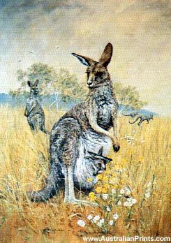 Faulk Kautzner, Kangaroo