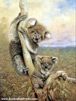 Faulk Kautzner, Koala