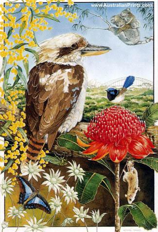 Ngaire Sales, Kookaburra